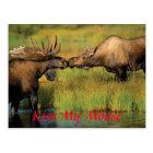 kiss my moose, Kiss My Moose Postcard