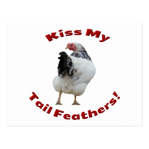 Kiss My Tail Feathers Postcard