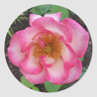 Kiss-Of-Desire Rose round sticker,envelope sealer Classic Round Sticker