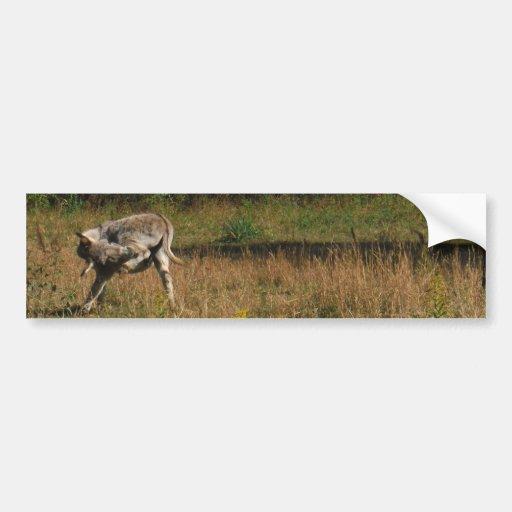 Kissing Butt Donkey Bumper Stickers