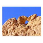 Kissing Camels Postcard
