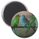 kissing parakeets 6 cm round magnet