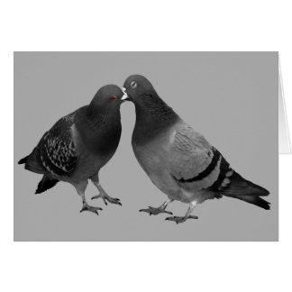Kissing Pigeons Greeting Card