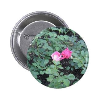 Kissing Roses 6 Cm Round Badge