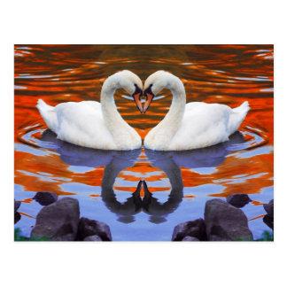 Kissing Swans in Love, Heart Shape Necks Postcard
