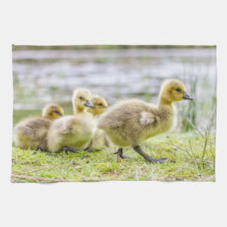 Kitchen Towel with baby gosling chicks very cute