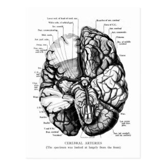 Kitsch Vintage Medical Illustration Your Brain Postcard