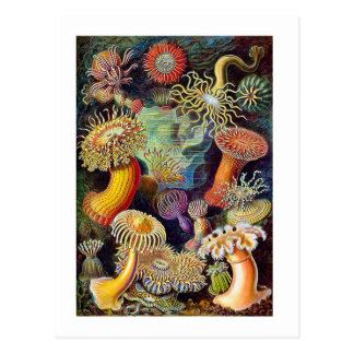 Kitsch Vintage Scientific Illustration Anemones Postcard