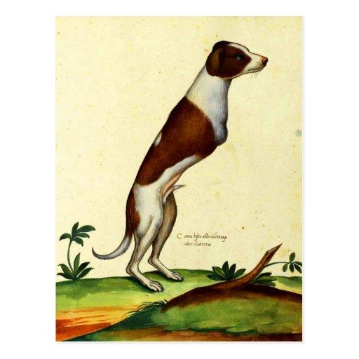 Kitsch Vintage Two Legged Dog Medieval Art Post Card