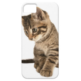 Kitten 2 barely there iPhone 5 case