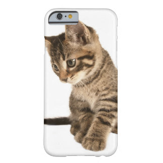 Kitten 2 barely there iPhone 6 case