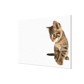 Kitten 2 canvas print