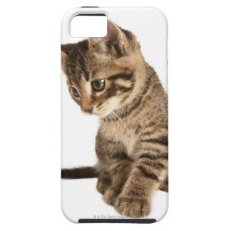 Kitten 2 iPhone 5 covers