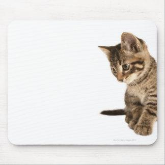 Kitten 2 mouse pad