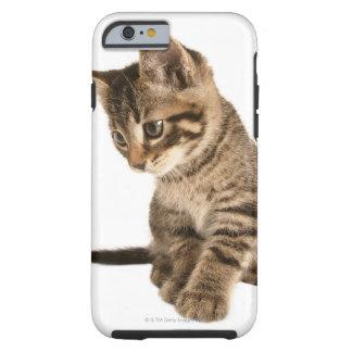 Kitten 2 tough iPhone 6 case