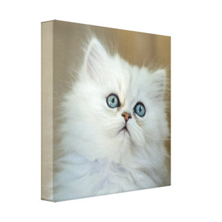"Kitten: 30.5cm x 30. cm (12""x12"") Wrapped Canvas"