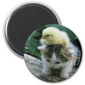 kitten 6 cm round magnet