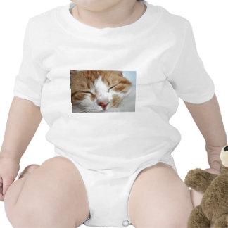 Kitten Afternoon Nap Photo Shirt