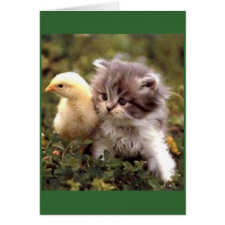 Kitten and Baby Chick Greeting Cards