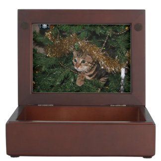 Kitten And Christmas Tree Keepsake Box