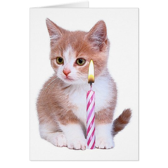Kitten and one pink candle card