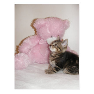 kitten and teddy bear postcards