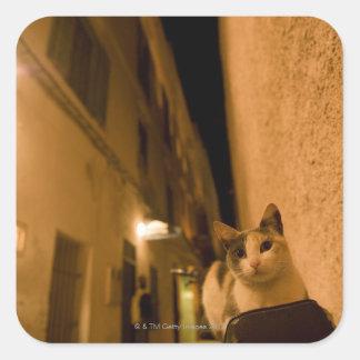 Kitten at dusk, Morocco Square Sticker