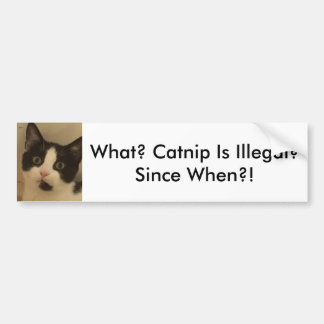 Kitten-Baby Catnip Bumper Sticker