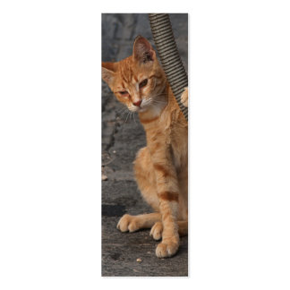 Kitten Bookmark Business Cards