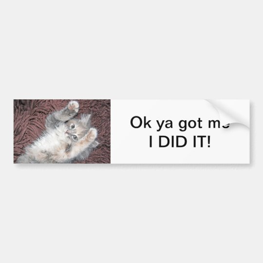 Kitten bumper sticker