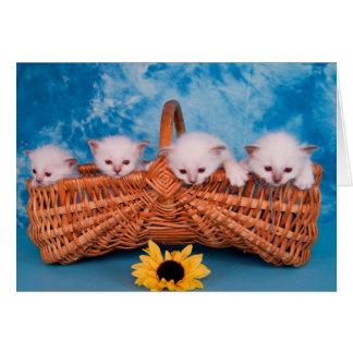 kitten cartes