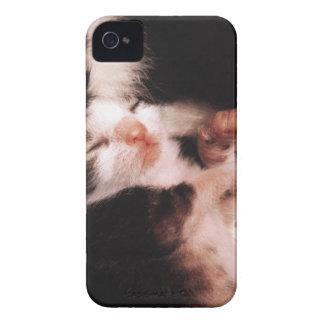 kitten Case-Mate iPhone 4 cases