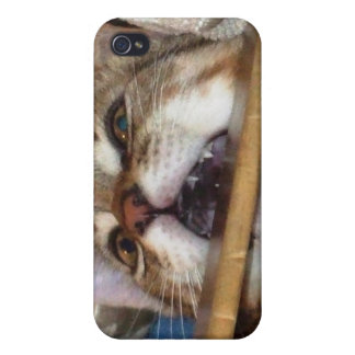 Kitten Chomp iPhone Case iPhone 4/4S Covers