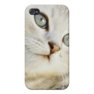 Kitten, close-up 2 iPhone 4 covers