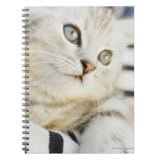 Kitten, close-up 2 notebooks