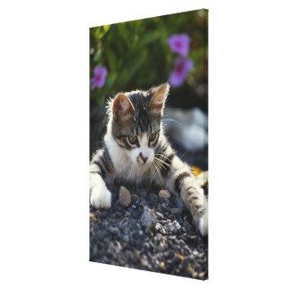 Kitten, close-up canvas print