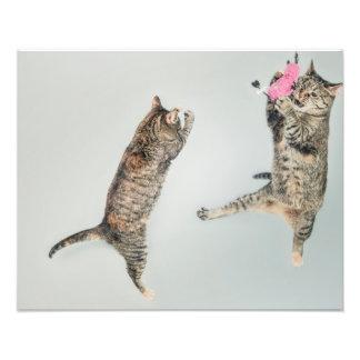 Kitten dance photograph