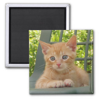 Kitten Dax Square Magnet