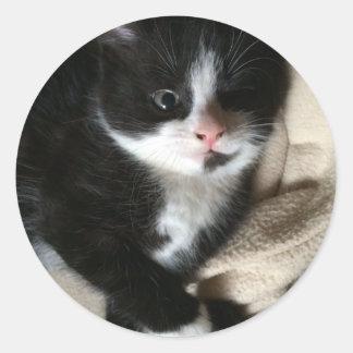 Kitten decal classic round sticker