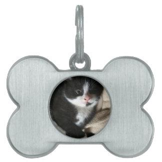 Kitten decal pet name tag