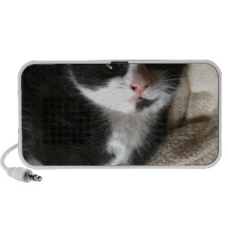 Kitten decal speakers