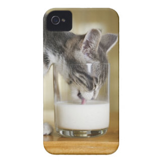 Kitten drinking milk from glass iPhone 4 covers