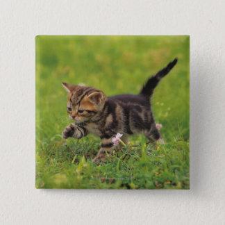Kitten exploring lawn 15 cm square badge
