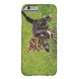 Kitten exploring lawn barely there iPhone 6 case