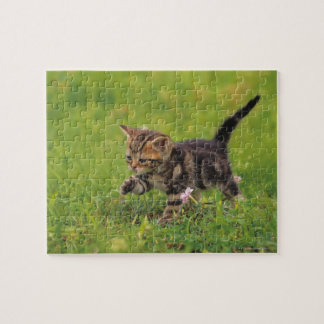 Kitten exploring lawn puzzle