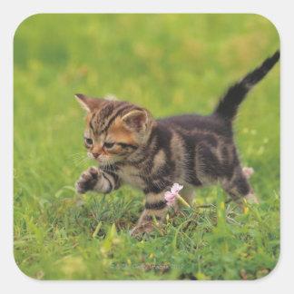 Kitten exploring lawn square sticker