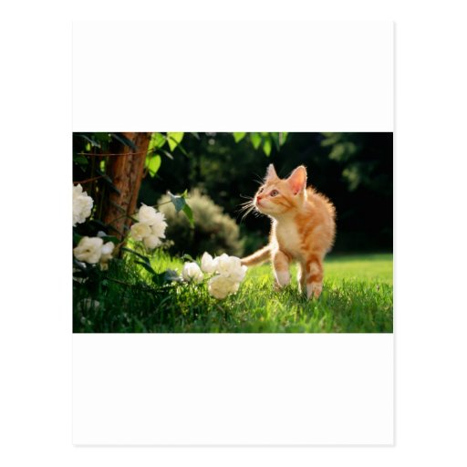 Kitten Exploring Outside by some Flowers Post Cards