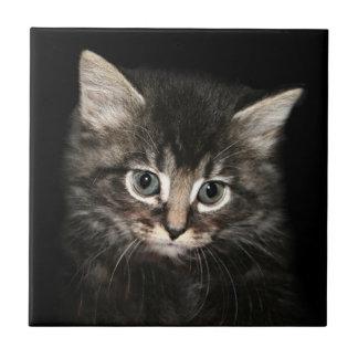 Kitten face tile