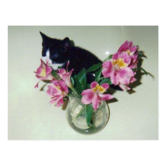 Kitten Flowers Vase Postcard
