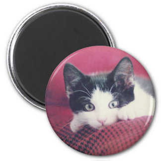 Kitten Fridge Magnet